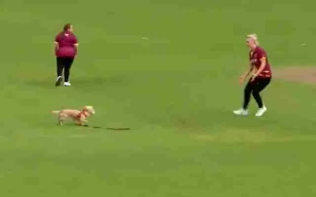 Dog stops play. (Photo Source: Ireland Women's Cricket/Twitter)